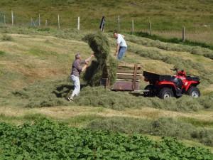Der høstes på Færøerne